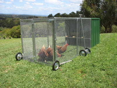 Thinking about backyard chickens? - Cape and Islands Self